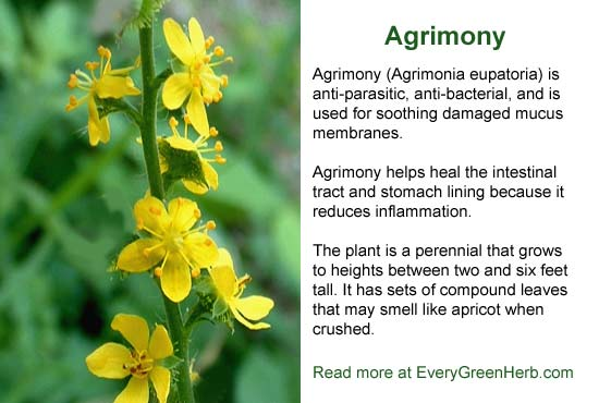 Agrimony is anti parasitic and soothes damaged mucus membranes