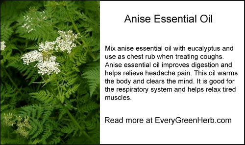 Anise essential oil is good in chest rubs