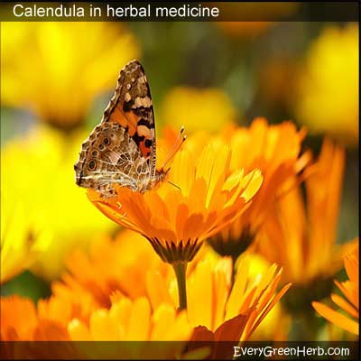 Calendula flowers with butterfly