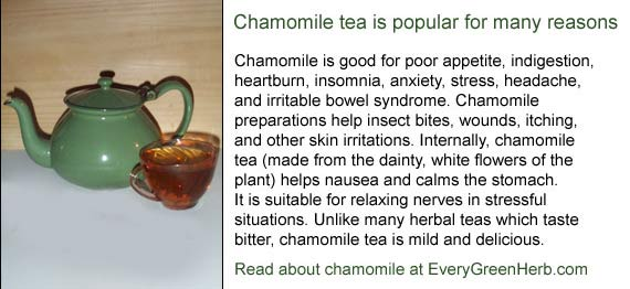 Chamomile tea helps relax the body and mind.