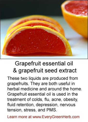 Grapefruit essential oil uplifts the spirit and cleans the air.