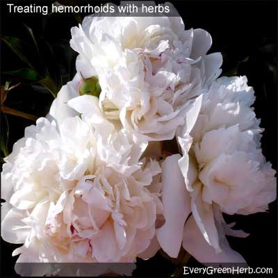 Peony roots are used in herbal medicine to heal hemorrhoids.