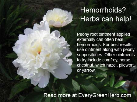 Treat hemorrhoids with peony root ointment