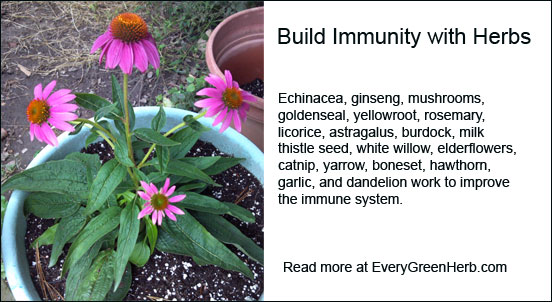 Build immunity with herbs