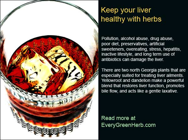 Herbs can help the liver
