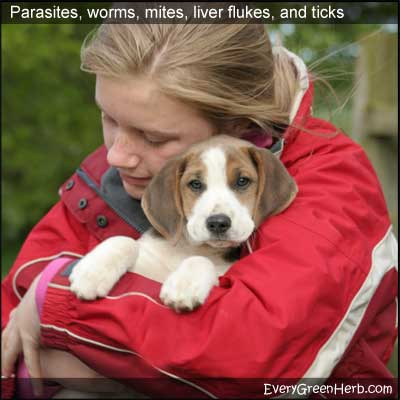 Girl with puppy is not worried about worms or parasites.