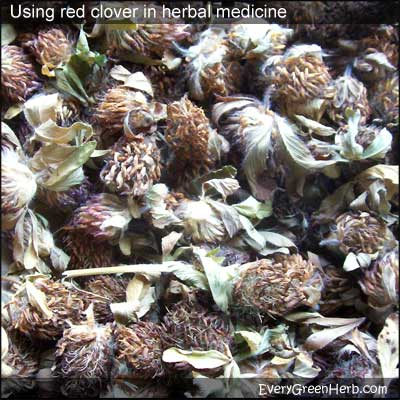 Dried red clover is used for treating menopausal symptoms like hot flashes.