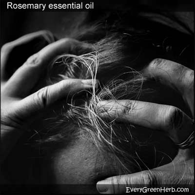 Itchy scalp can be treated with rosemary essential oil.