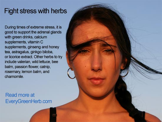 Fight stress with herbs