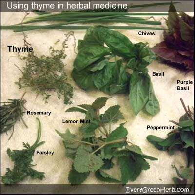 Thyme, basil, chives, mint, and other sprigs of herbs