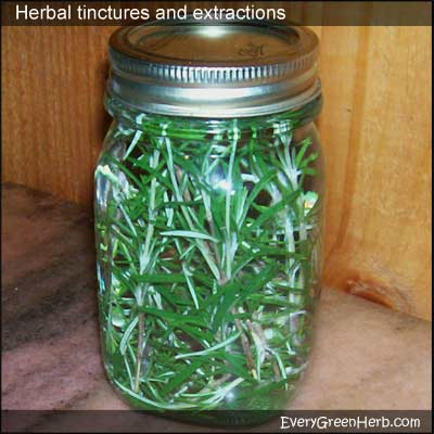 Pint jar of rosemary tincture