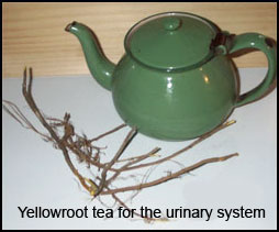 Yellowroot tea